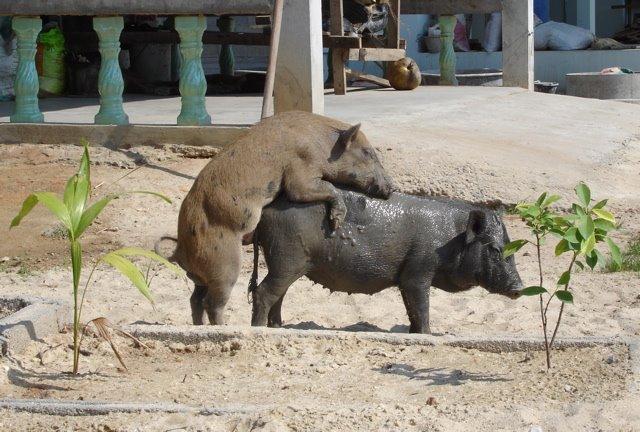Rafael Archuleta: Thailand: Public display of affection ...